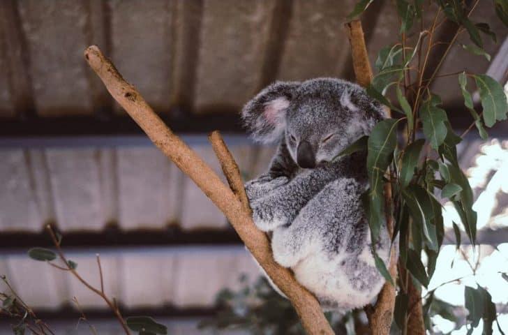 オーストラリアシドニーの2週間の短期留学!最初の1週間でやったことは?