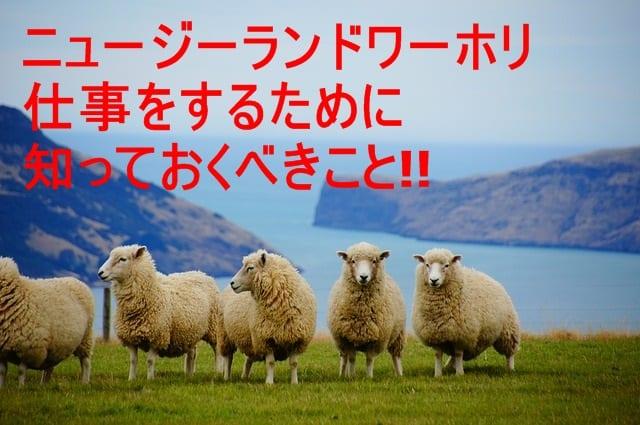 ニュージーランドへワーホリに行く人必見!!仕事をするためには?
